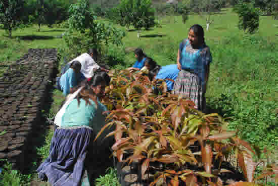 Young women in a tree nursery in Guatemala, part of a development project run by Community Cloud Fund Conservation